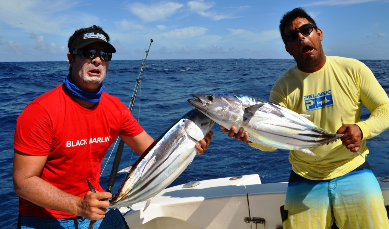Bonite à ventre rayé ou Katsuwonus pelamis - Rod Fishing Club - Ile Rodrigues - Maurice - Océan Indien )