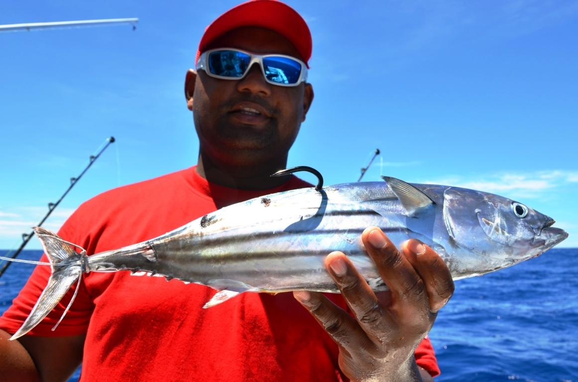 Bonite montée pour le requin ou doggy - Rod Fishing Club - Ile Rodrigues - Maurice - Océan Indien