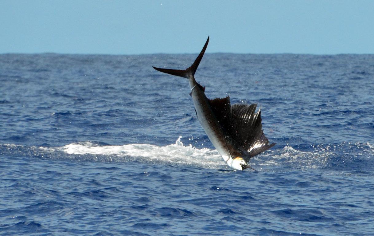 Saut de voilier - Rod Fishing Club - Ile Rodrigues - Maurice - Océan Indien