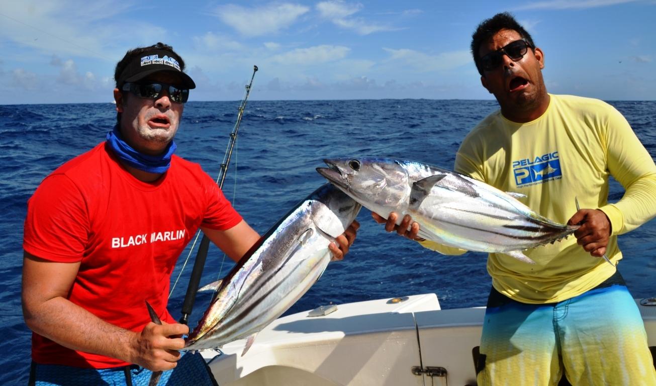 Skipjack tunas - Rod Fishing Club - Rodrigues Island - Mauritius - Indian Ocean