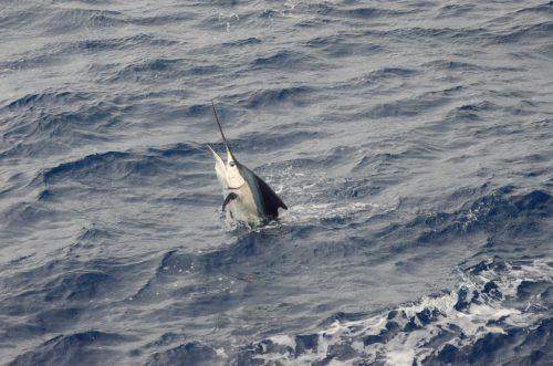 Voilier au décollage - Rod Fishing Club - Ile Rodrigues - Maurice - Océan Indien
