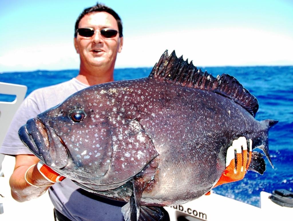 White blotched grouper or Epinephelus multinotatus fishing technique - Rod Fishing Club - Rodrigues Island - Mauritius - Indian Ocean