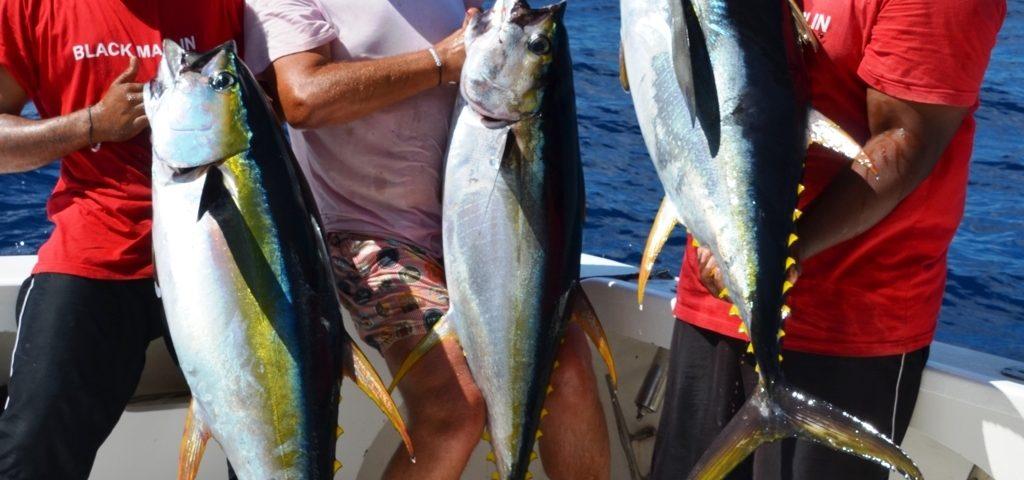 beau triplé de thons jaunes - Rod Fishing Club - Ile Rodrigues - Maurice - Océan Indien