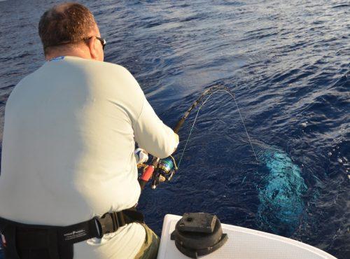 doggy arrivant au bateau - Rod Fishing Club - Ile Rodrigues - Maurice - Océan Indien