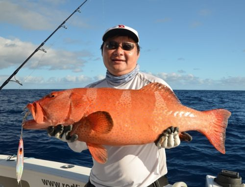 mérou babone au jig - Rod Fishing Club - Ile Rodrigues - Maurice - Océan Indien
