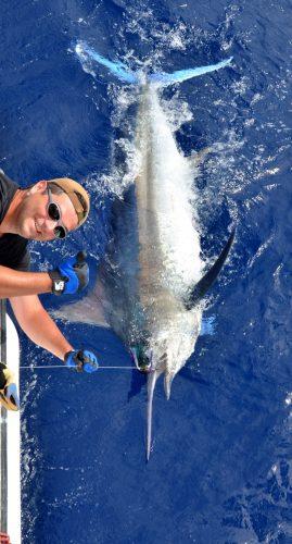 marlin noir de 120kg relâché par Fabrice - Rod Fishing Club - Ile Rodrigues - Maurice - Océan Indien