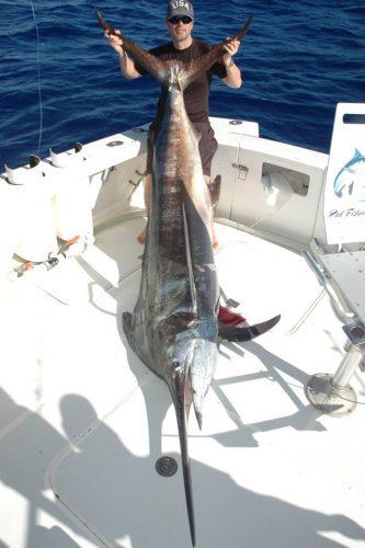 marlin noir de 150kg - Rod Fishing Club - Ile Rodrigues - Maurice - Océan Indien