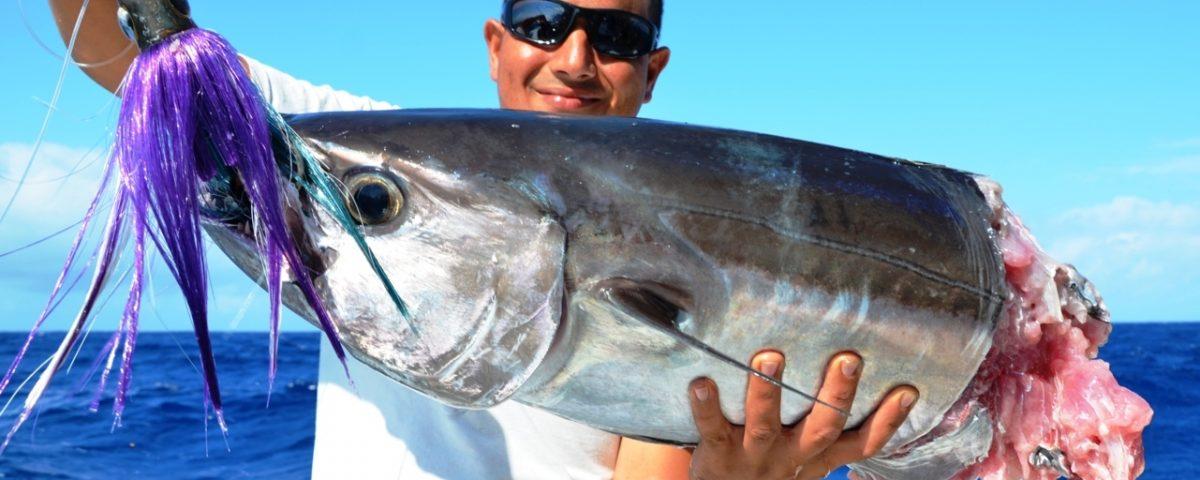 moitié de thon à dents de chien pour Aviram - Rod Fishing Club - Ile Rodrigues - Maurice - Océan Indien