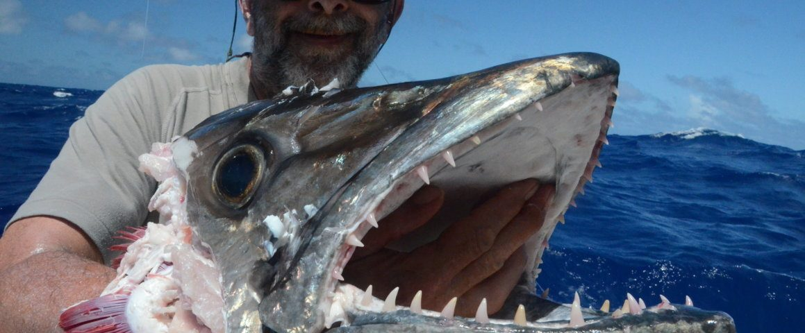 tête de thon à dents de chien de 50kg dévorée par un requin - Rod Fishing Club - Ile Rodrigues - Maurice - Océan Indien