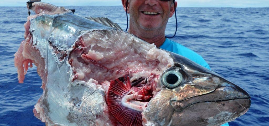 thon à dents de chien dévoré par les requins - Rod Fishing Club - Ile Rodrigues - Maurice - Océan Indien
