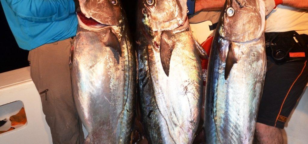triplé de beaux thons à dents de chien - Rod Fishing Club - Ile Rodrig