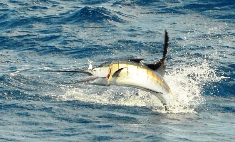 voilier en plein saut - Rod Fishing Club - Ile Rodrigues - Maurice - Océan Indien