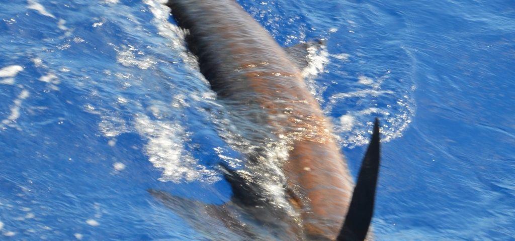 voilier relâché - Rod Fishing Club - Ile Rodrigues - Maurice - Océan Indien