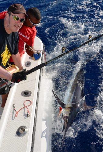100kg black marlin released on trolling - Rod Fishing Club - Rodrigues Island - Mauritius - Indian Ocean