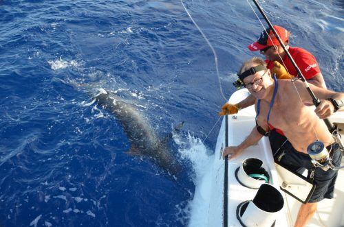 150kg blue marlin released on heavy spinning - Rod Fishing Club - Rodrigues Island - Mauritius - Indian Ocean