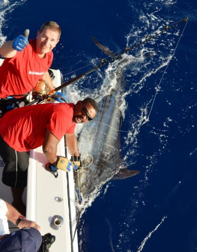 200kg blue marlin released - Rod Fishing Club - Rodrigues Island - Mauritius - Indian Ocean
