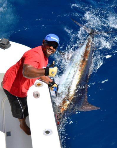 230kg blue marlin on leader- Rod Fishing Club - Rodrigues Island - Mauritius - Indian Ocean