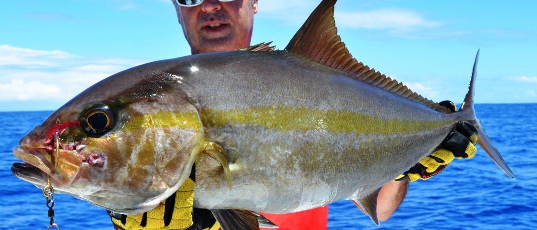Amberjack or Seriola dumerili - Rod Fishing Club - Rodrigues Island - Mauritius - Indian Ocean