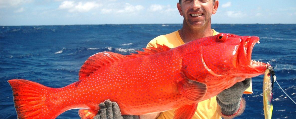 Babone ou Plectropomus punctatus - Rod Fishing Club - Ile Rodrigues - Maurice - Océan Indien