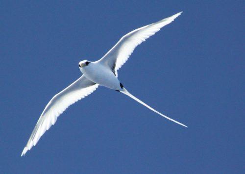 Bird in Rodrigues - Rod Fishing Club - Rodrigues Island - Mauritius - Indian Ocean