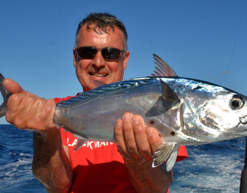 Black jack or Euthynnus affinis - Rod Fishing Club - Rodrigues Island - Mauritius - Indian Ocean