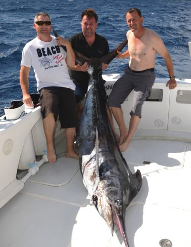 Black marlin on trolling - Rod Fishing Club - Rodrigues Island - Mauritius - Indian Ocean