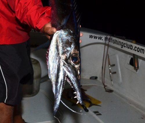 Black snoek on deep baiting - Rod Fishing Club - Rodrigues Island - Mauritius - Indian Ocean