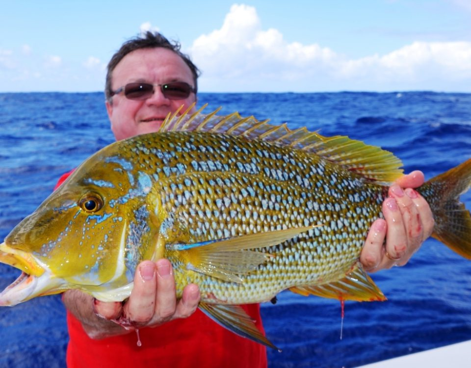 Capitaine ou Lethrinus nebulosus - Rod Fishing Club - Ile Rodrigues - Maurice - Océan Indien