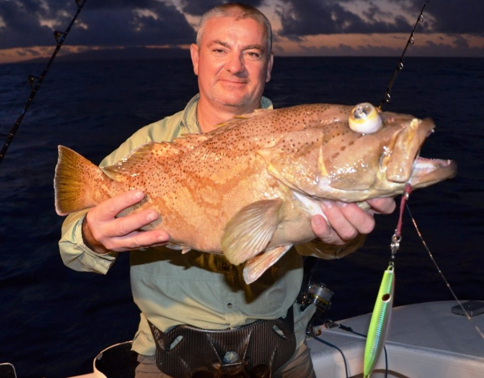 Comet Grouper or Epinephelus morrhua - Rod Fishing Club - Rodrigues Island - Mauritius - Indian Ocean