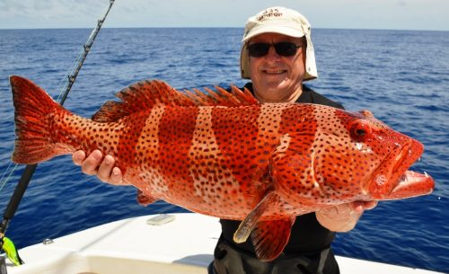 Coral trout - Rod Fishing Club - Rodrigues Island - Mauritius - Indian Ocean