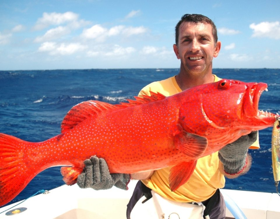 Coral trout or Plectropomus punctatus - Rod Fishing Club - Rodrigues Island - Mauritius - Indian Ocean