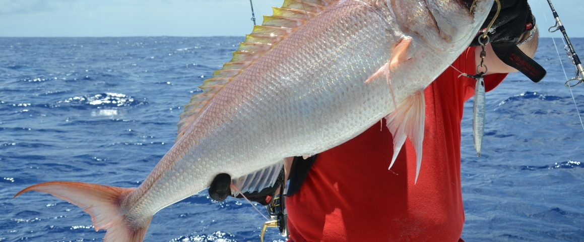 Crimson job fish or Pristipomides filamentosus - Rod Fishing Club - Rodrigues Island - Mauritius - Indian Ocean