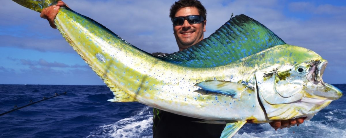 Dorado or Coryphaena hippurus - Rod Fishing Club - Rodrigues Island - Mauritius - Indian Ocean