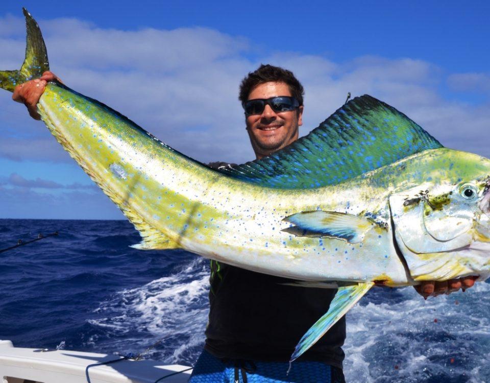 Dorado or Coryphaena hippurus - Rod Fishing Club - Rodrigues Island - Mauritius - Indian Ocean