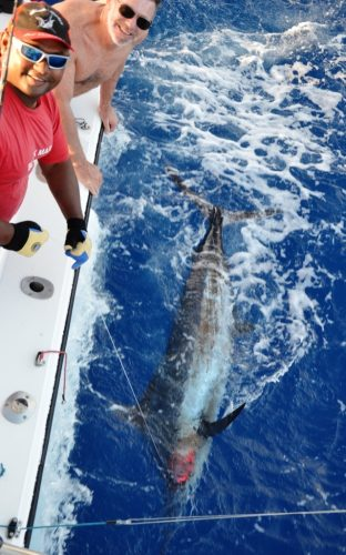 Gerard releases his blue marlin- Rod Fishing Club - Rodrigues Island - Mauritius - Indian Ocean