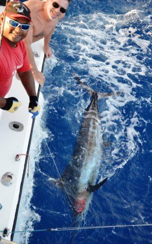 Gerard releases his blue marlin- Rod Fishing Club - Rodrigues Island - Mauritius - Indian Ocean