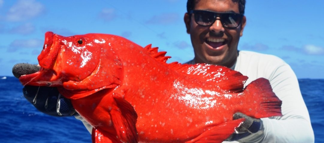 Golden hind grouper or Cephalopholis aurantia - Rod Fishing Club - Rodrigues Island - Mauritius - Indian Ocean