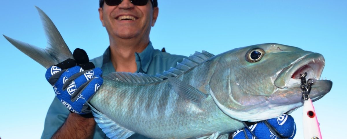 Green jobfish or Aprion virescens - Rod Fishing Club - Rodrigues Island - Mauritius - Indian Ocean