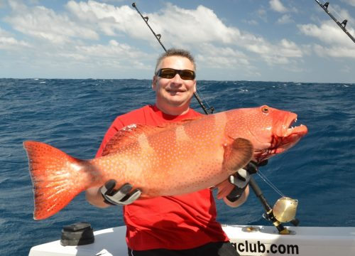 Grouper on jigging - Rod Fishing Club - Rodrigues Island - Mauritius - Indian Ocean