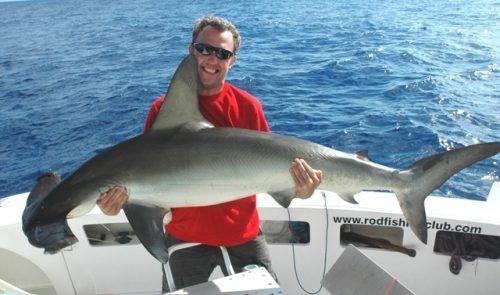 Hammerhead shark on baiting - Rod Fishing Club - Rodrigues Island - Mauritius - Indian Ocean