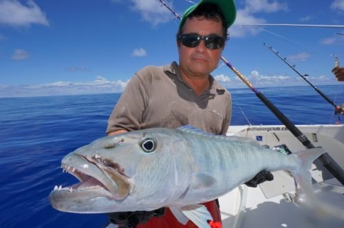 Jobfish on baiting - Rod Fishing Club - Rodrigues Island - Mauritius - Indian Ocean