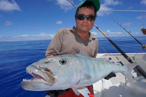 Jobfish on baiting - Rod Fishing Club - Rodrigues Island - Mauritius - Indian Ocean