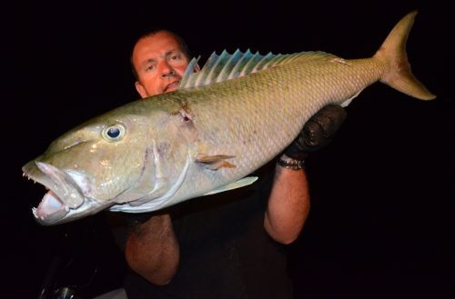 Jobfish on night jigging - Rod Fishing Club - Rodrigues Island - Mauritius - Indian Ocean