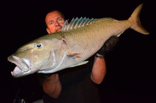 Jobfish on night jigging - Rod Fishing Club - Rodrigues Island - Mauritius - Indian Ocean