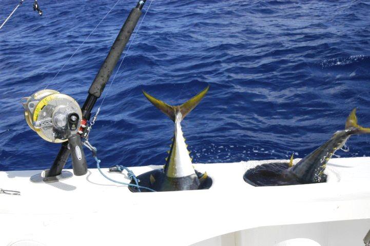 Livebaits on the tuna tube - Rod Fishing Club - Rodrigues Island - Mauritius - Indian Ocean