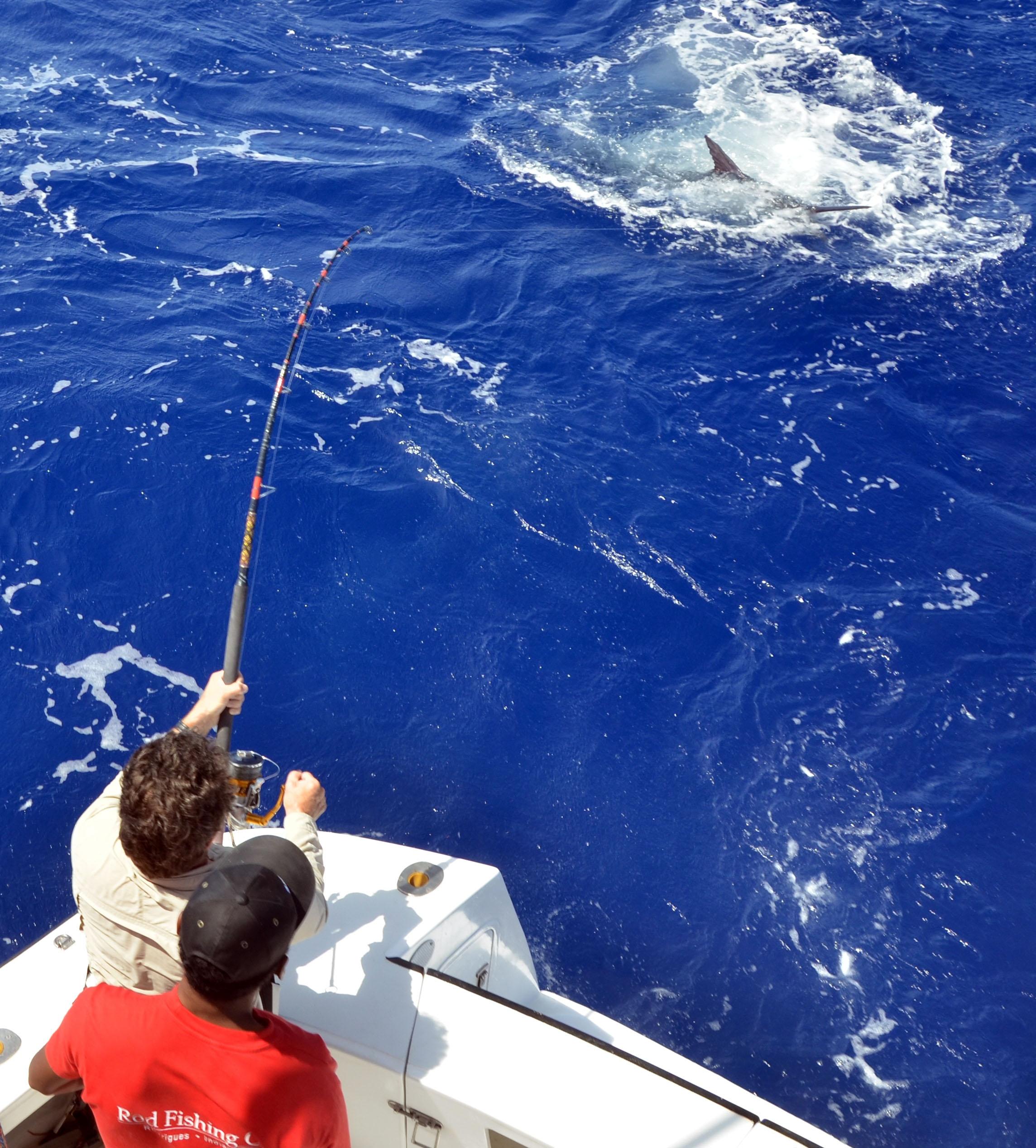 Marlin au bateau en Heavy Spinning par Claudius - Déc 2012 - Rod Fishing Club - Ile Rodrigues - Maurice - Océan Indien