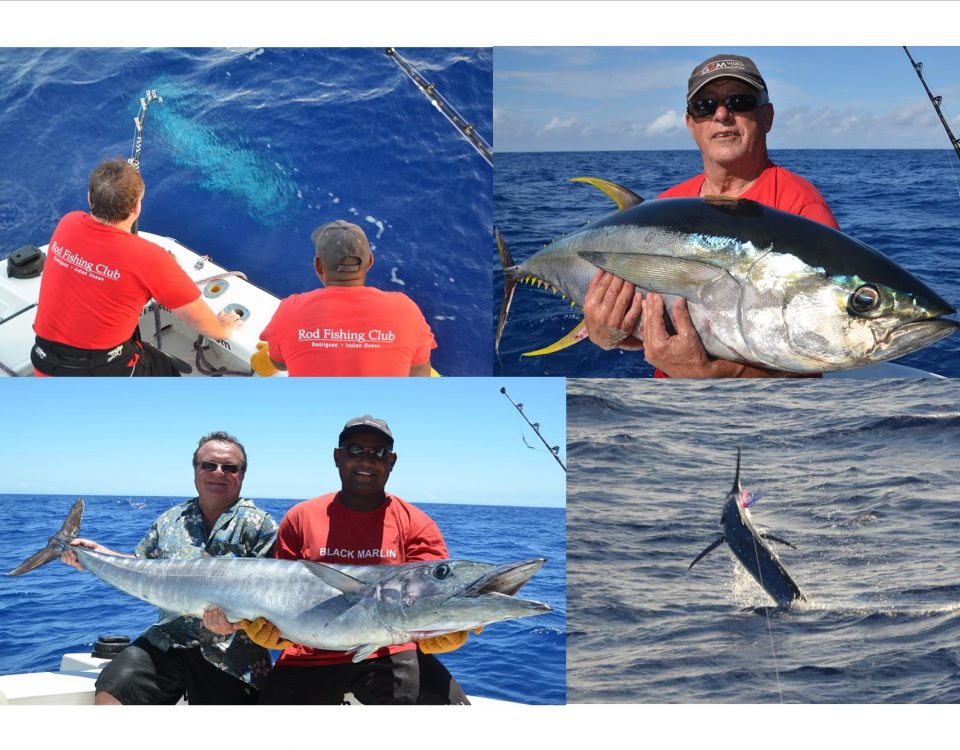 Marlin, yellowfin tuna and wahoo - Rod Fishing Club - Rodrigues Island - Mauritius - Indian Ocean