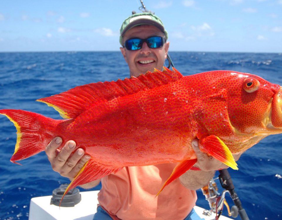 Moontail sea bass or Variola luti - Rod Fishing Club - Rodrigues Island - Mauritius - Indian Ocean