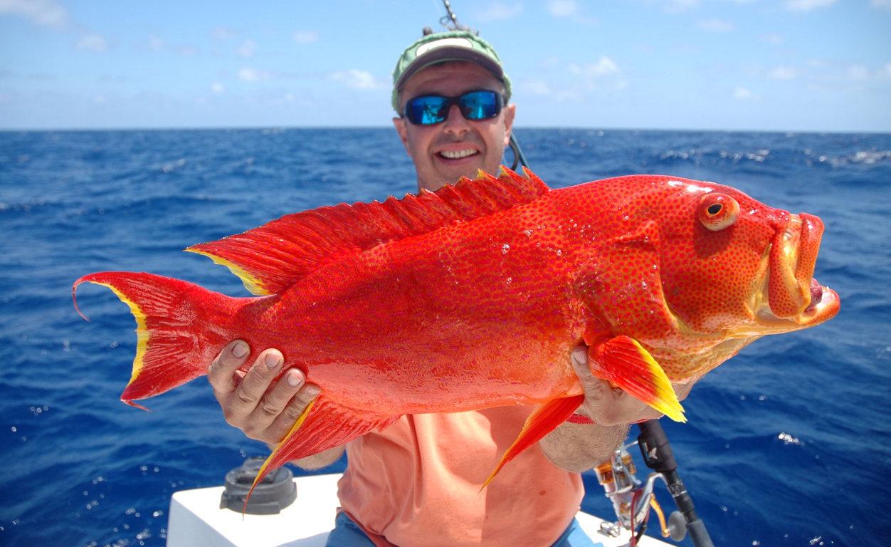 Moon tail sea bass or variola luti rod fishing club for Fishing rod sun and moon