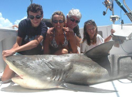 Nice bull shark on baiting - Rod Fishing Club - Rodrigues Island - Mauritius - Indian Ocean